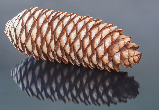 Pine Cones Autumn Nature Tap